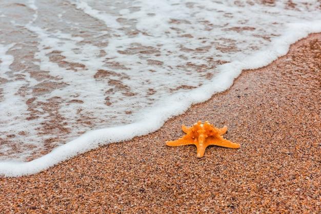 Zeesterren op zomerthema aan zee