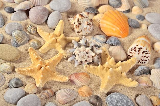 Zeesterren, schelpen en kiezelstenen close-up
