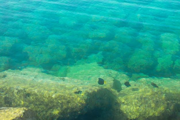 Zeevis in de rode zee sinaï-schiereiland egypte natuurlijke achtergrond