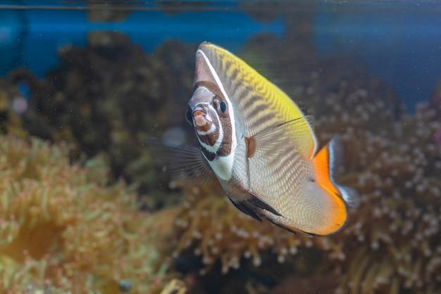 Zeevissen en prachtige koralen