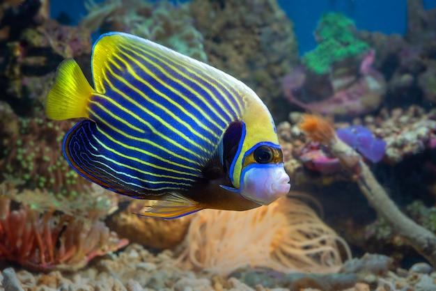 Zeevissen met prachtige kleuren