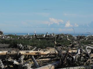 Zeevogel eiland