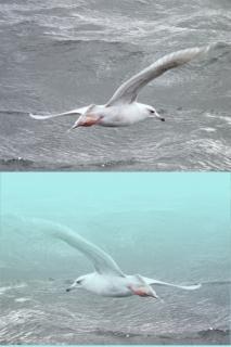 Zeevogels, natuurlijke
