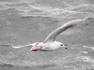 Zeevogels vliegen over de zee