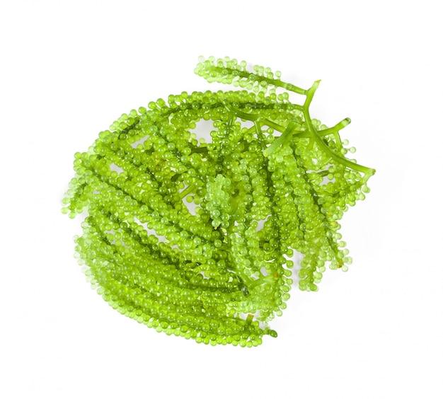 Zeewier (groene kaviaar) zeewier op witte ondergrond