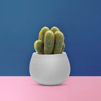 Zeezandcactus in een grijze pot