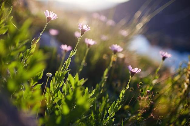 Zeldzame bergbloemen en planten die op helling groeien