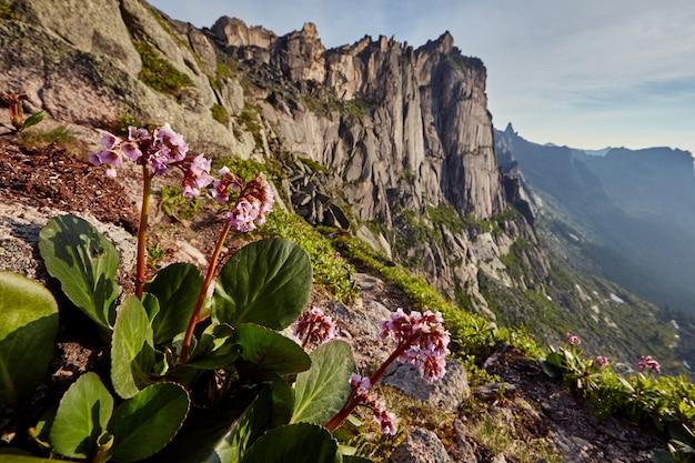 Zeldzame bergplanten en bloemen groeien in de buurt van de bergstroom op een heldere zonnige dag