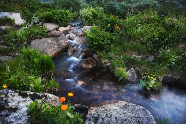 Zeldzame bergplanten en bloemen groeien op een heldere zonnige dag in de buurt van de bergbeek. verbazingwekkende flora van de bergen, planten vermeld in het rode boek