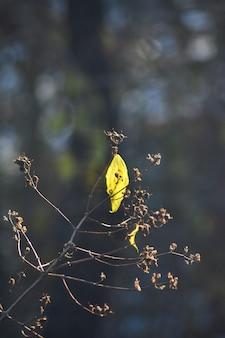 Zeldzame bladeren aan een boom in de herfst