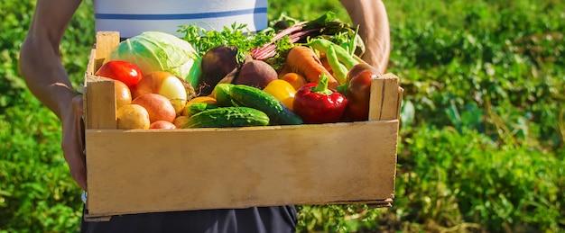 Zelfgemaakte groenten in de handen van mannen. oogst. selectieve aandacht.