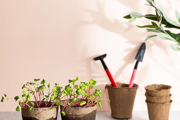 Zelfkweek van microgroen thuis microgroene radijszaailingen
