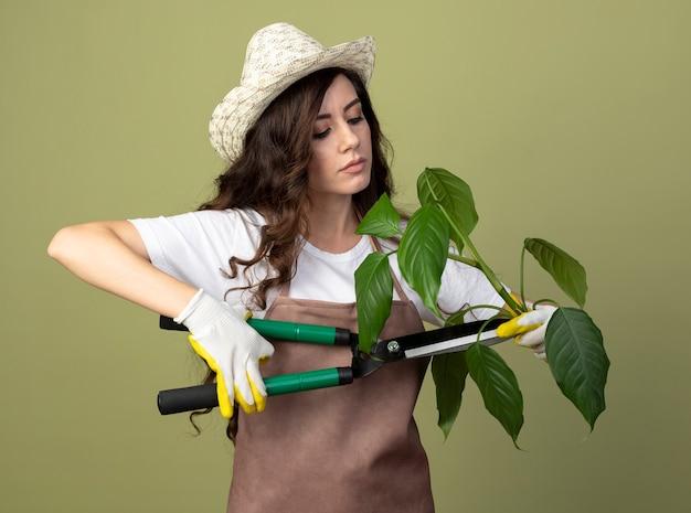 Zelfverzekerde jonge vrouwelijke tuinman in uniform dragen tuinieren hoed en handschoenen pretendeert plant te snijden met tondeuse geïsoleerd op olijfgroene muur met kopie ruimte