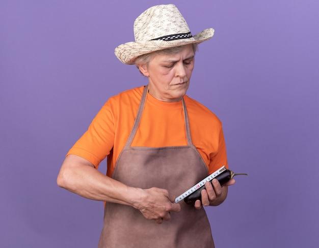 Zelfverzekerde oudere vrouwelijke tuinman met een tuinhoed die aubergine meet met meetlint geïsoleerd op paarse muur met kopieerruimte