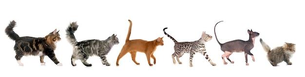 Zes lopende katten die op wit worden geïsoleerd