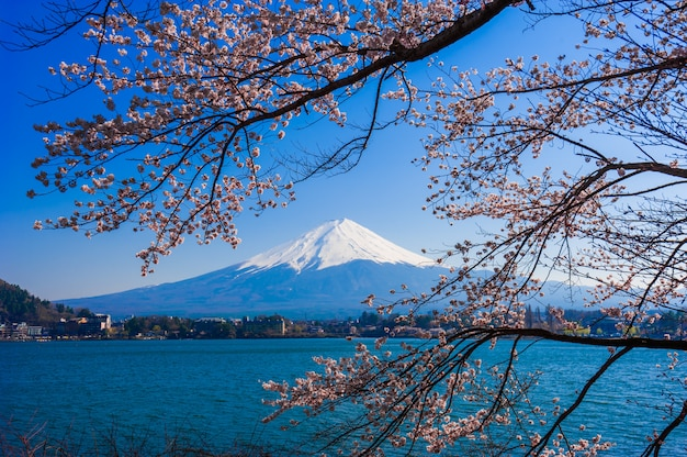 Zet fuji-mening van kawaguchiko-meer, japan met kersenbloesem op