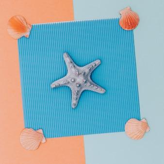 Zet schelpen. minimaal. sea vibes candy kleuren ontwerp