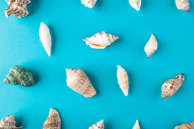 Zet schelpen op aqua-oppervlak. minimal art design