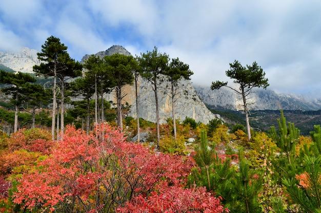 Zet shaan-kaya op, de stad van alupka, de krim. een heel mooi herfstlandschap