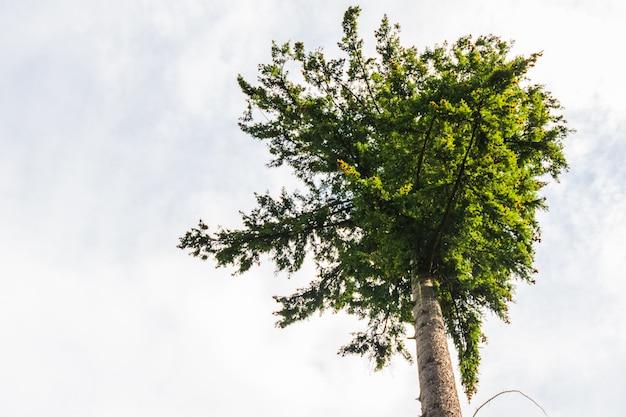 Zicht op bomen vanuit een bos
