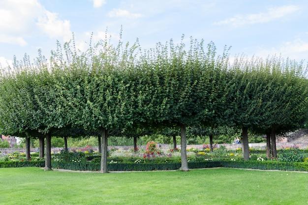 Zicht op een groen gazon met ronde bomen en een bloembed met bloemen.