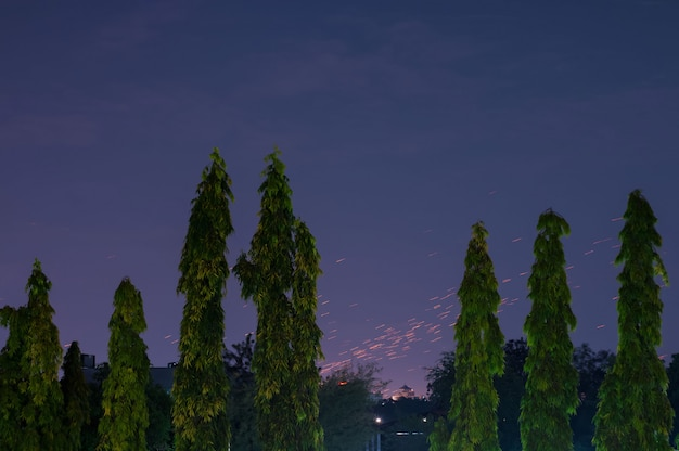 Zicht op sterren of meteorenregen met de voorkant van de groene bomen. prachtig nachtzicht