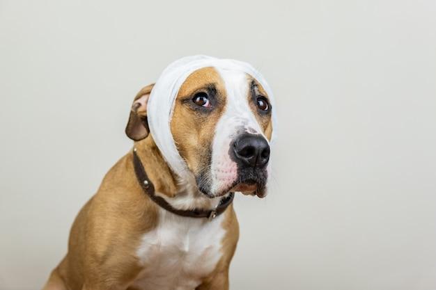 Ziek of gewond huisdierenconcept. portret van hond met verbonden hoofd bij witte achtergrond