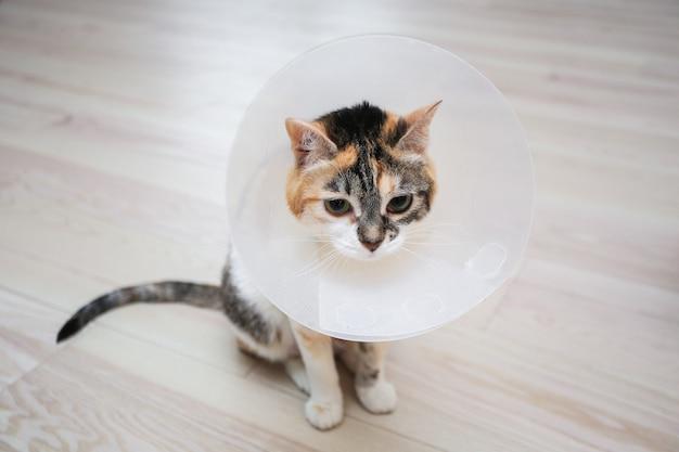 Zieke kat met veterinaire kegel of plastic kegelhalsband om de kat te beschermen tegen het likken van een wond