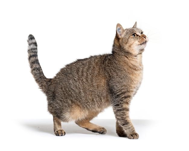 Zijaanzicht op een kruisingskat die omhoog kijkt