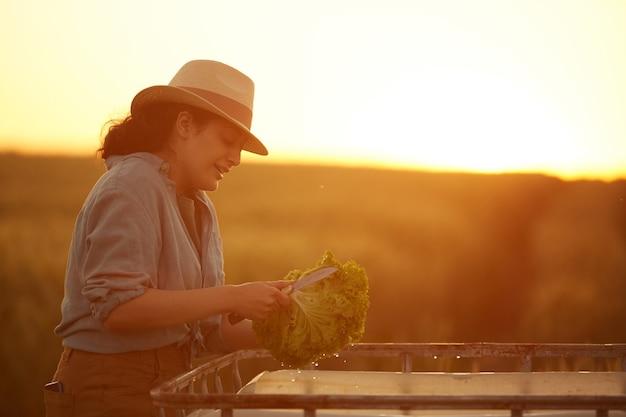 Zijaanzicht portret van glimlachende boerin snijden en wassen van groenten tijdens het verzamelen van oogst op veld in gouden zonsondergang licht, kopieer ruimte