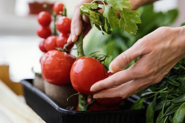 Zijaanzicht van de vrouw die voor geplante tomaten zorgt