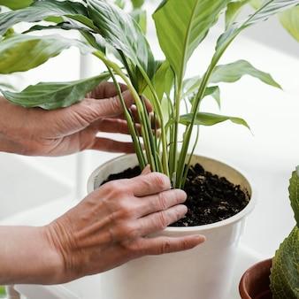 Zijaanzicht van de vrouw die voor kamerplanten in potten zorgt
