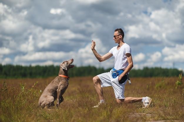 Zijaanzicht van de weimaraner-hond zittend op het veld en gericht op de hand van de mannelijke eigenaar tijdens het trainen