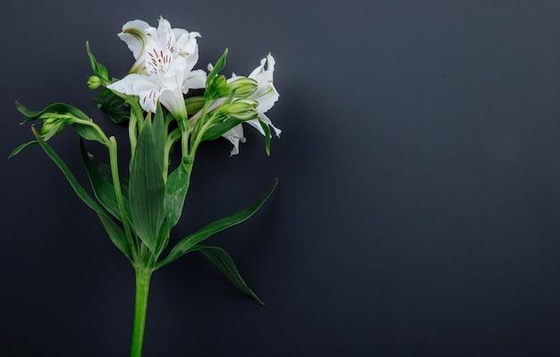 Zijaanzicht van de witte die bloemen van kleurenalstroemeria op zwarte achtergrond met exemplaarruimte wordt geïsoleerd