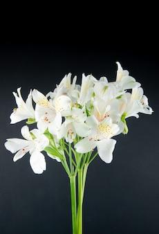 Zijaanzicht van de witte die bloemen van kleurenalstroemeria op zwarte achtergrond wordt geïsoleerd