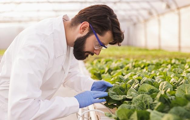Zijaanzicht van een bebaarde man in laboratoriumjas en handschoenen bladeren van spruiten te onderzoeken tijdens het werken in broeikas op boerderij