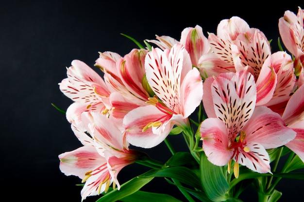 Zijaanzicht van een boeket van de roze bloemen van kleurenalstroemeria die op zwarte achtergrond worden geïsoleerd