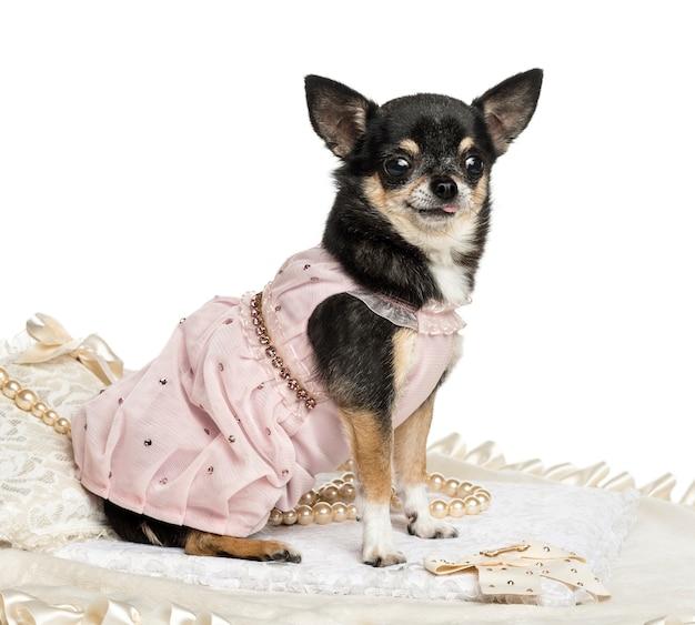 Zijaanzicht van een chihuahua die een kanten jurk draagt, geïsoleerd op wit