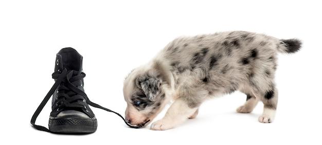 Zijaanzicht van een kruising puppy spelen met een schoen geïsoleerd op wit