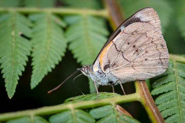 Zijaanzicht van een vlinder terwijl hij wat zonnestralen op zijn vleugels ontvangt