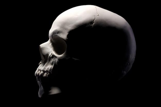 Zijaanzicht van gipsmodel van de menselijke schedel geïsoleerd op zwarte achtergrond met uitknippad. concept van terreur, fysiologie leren en tekenen.