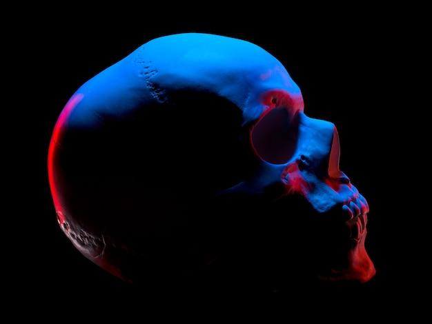 Zijaanzicht van gipsmodel van de menselijke schedel in neonlichten die op zwarte achtergrond met uitknippad worden geïsoleerd
