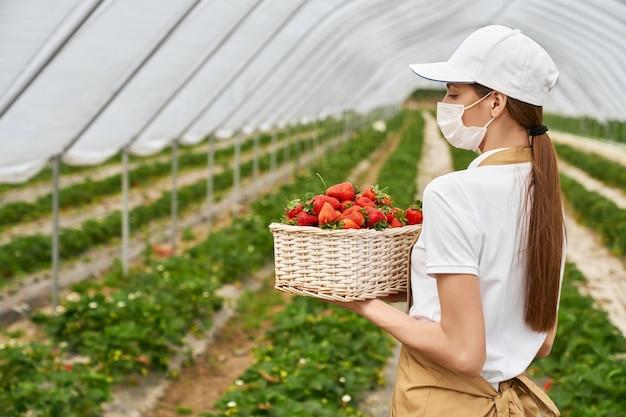 Zijaanzicht van jonge brunette vrouw in beschermend masker en beige schort met rieten mand met rode smakelijke aardbeien. concept van het bewonderen van goede oogst verse aardbeien in kas.