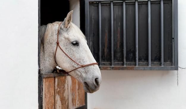 Zijaanzicht van paard in de stallen van een boerderij