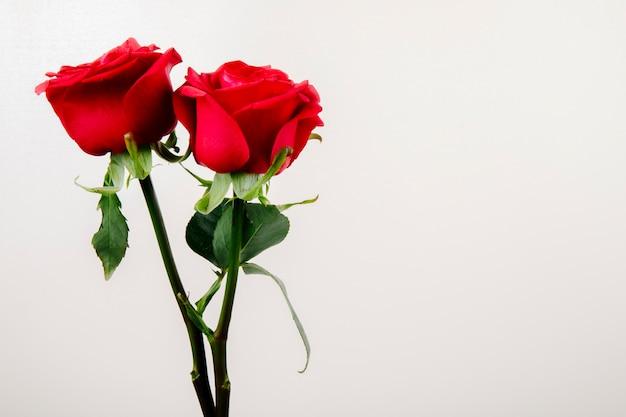 Zijaanzicht van rode kleurenrozen die op witte achtergrond met exemplaarruimte worden geïsoleerd