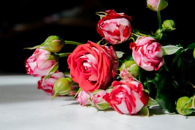 Zijaanzicht van rode rozen met toppen en groene bladeren op een witte achtergrond