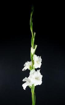 Zijaanzicht van witte gladiolenbloem dat op zwarte achtergrond wordt geïsoleerd