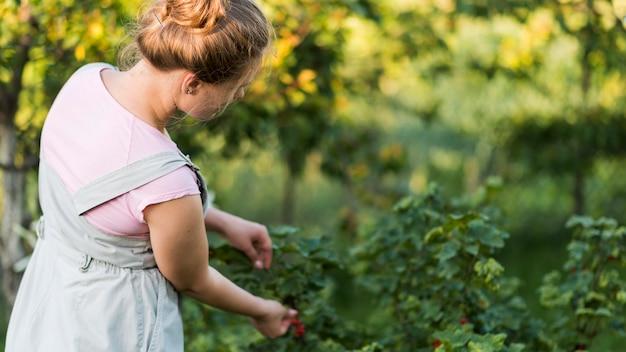 Zijaanzichtmeisje het plukken vruchten