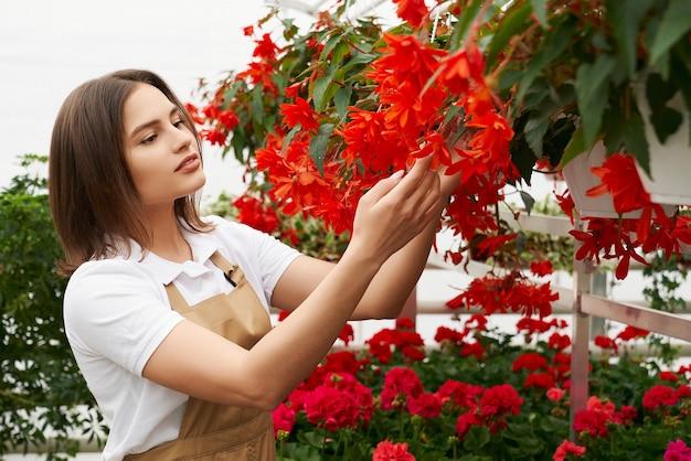 Zijaanzichtportret van aantrekkelijke jonge vrouw in beige schort die de mooie rode bloemen in moderne serre bewonderen. concept van zorg voor planten en voorbereiding voor verkoop.