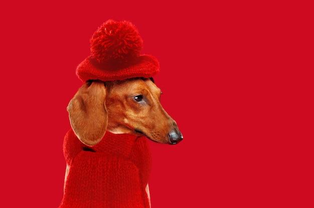 Zijaanzichtportret van een tekkel die rode baret en sjaal draagt